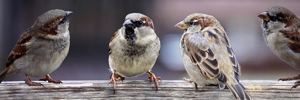 Hoor de vogeltjesfluiten…